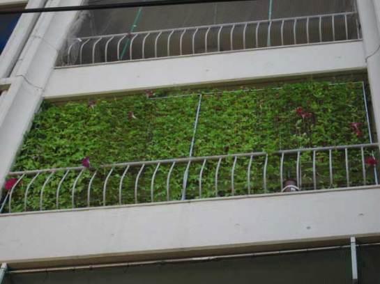 green curtains utilizando trepadeiras em varandas teto arquitetura sustent vel e paisagismo. Black Bedroom Furniture Sets. Home Design Ideas